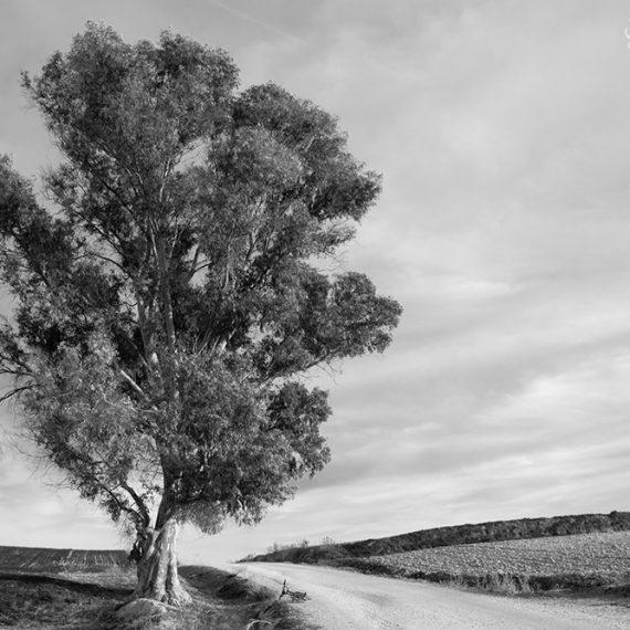 El niño en el eucalipto – Boy in the eucalyptus tree