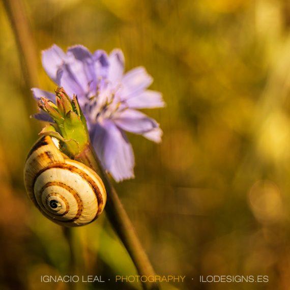 Caracol y azul – snail on blue
