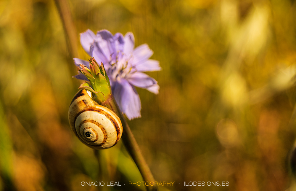 Caracol y azul – snail on blue