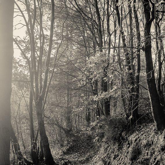 El sendero del bosque – path in the woods