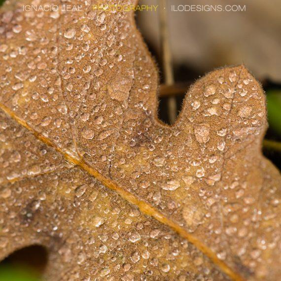 Gotas de lluvia – raindrops