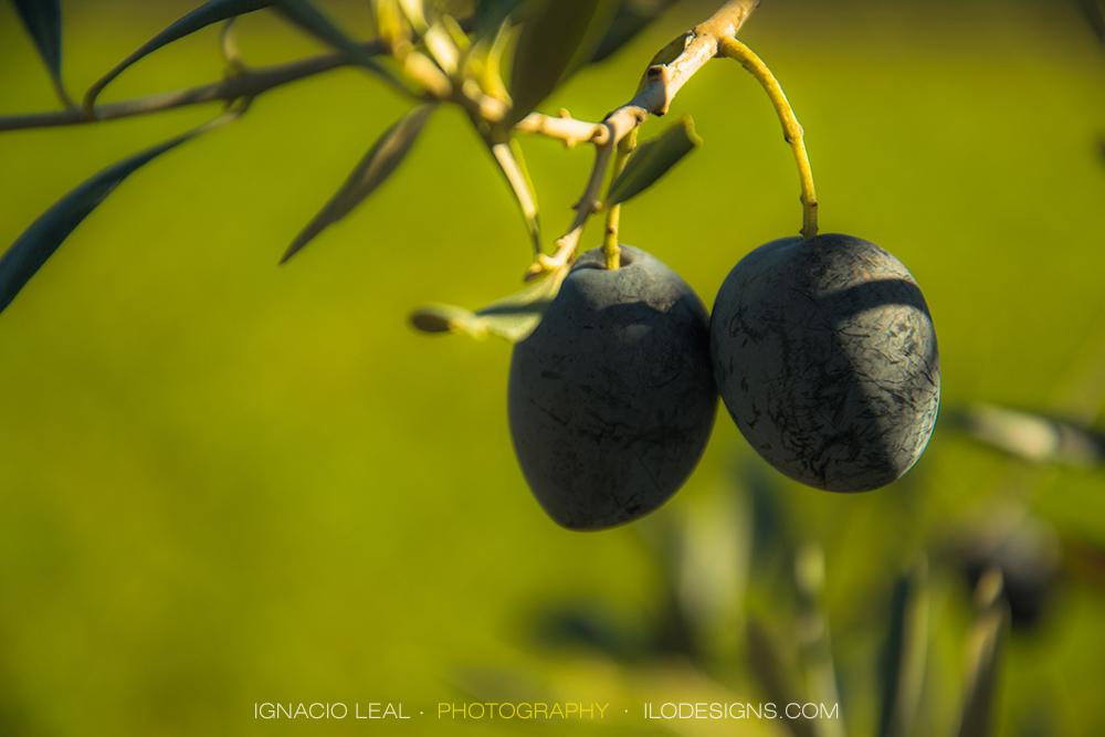 Olivas – olives