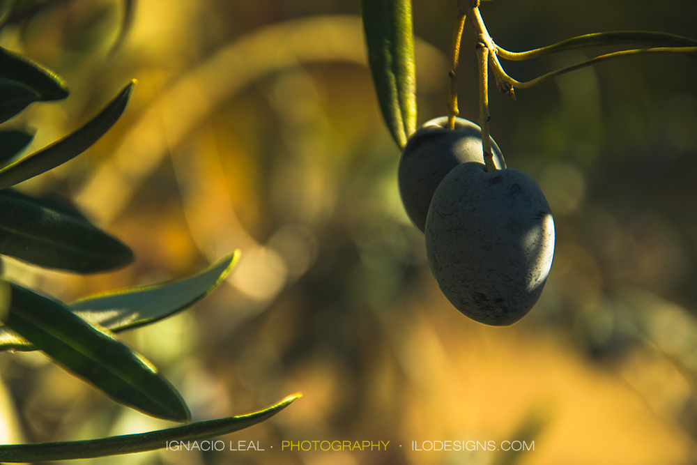 olives_aceitunas