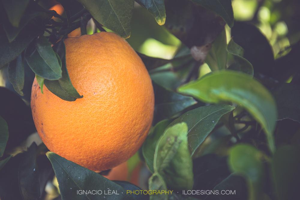 Orange – naranja #1