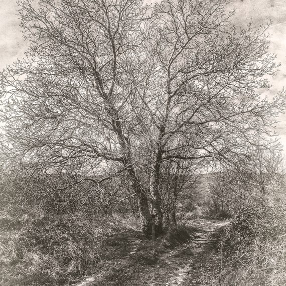 El árbol del camino – The tree on the path