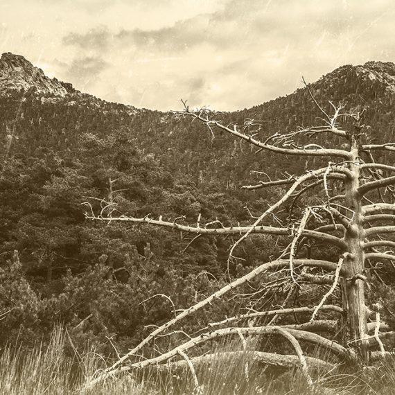 El collado – the hill