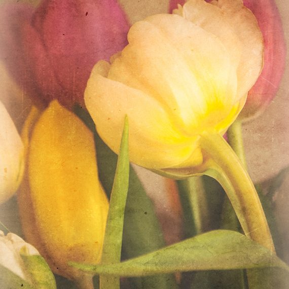 Tulipanes en retro #1 – retro tulips #1