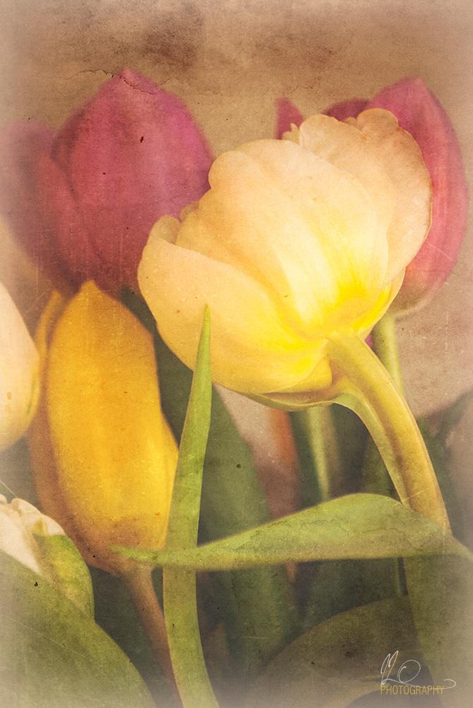 tulips_retro