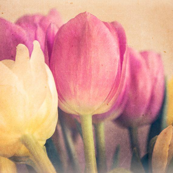 Tulipanes en retro #2 – retro tulips #2