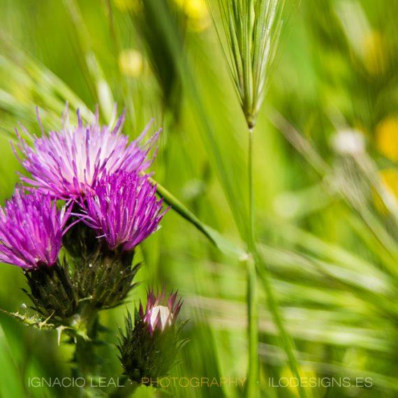 Morado sobre verde – purple on green