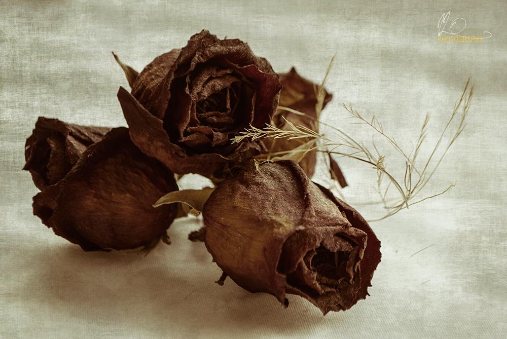rosas_roses