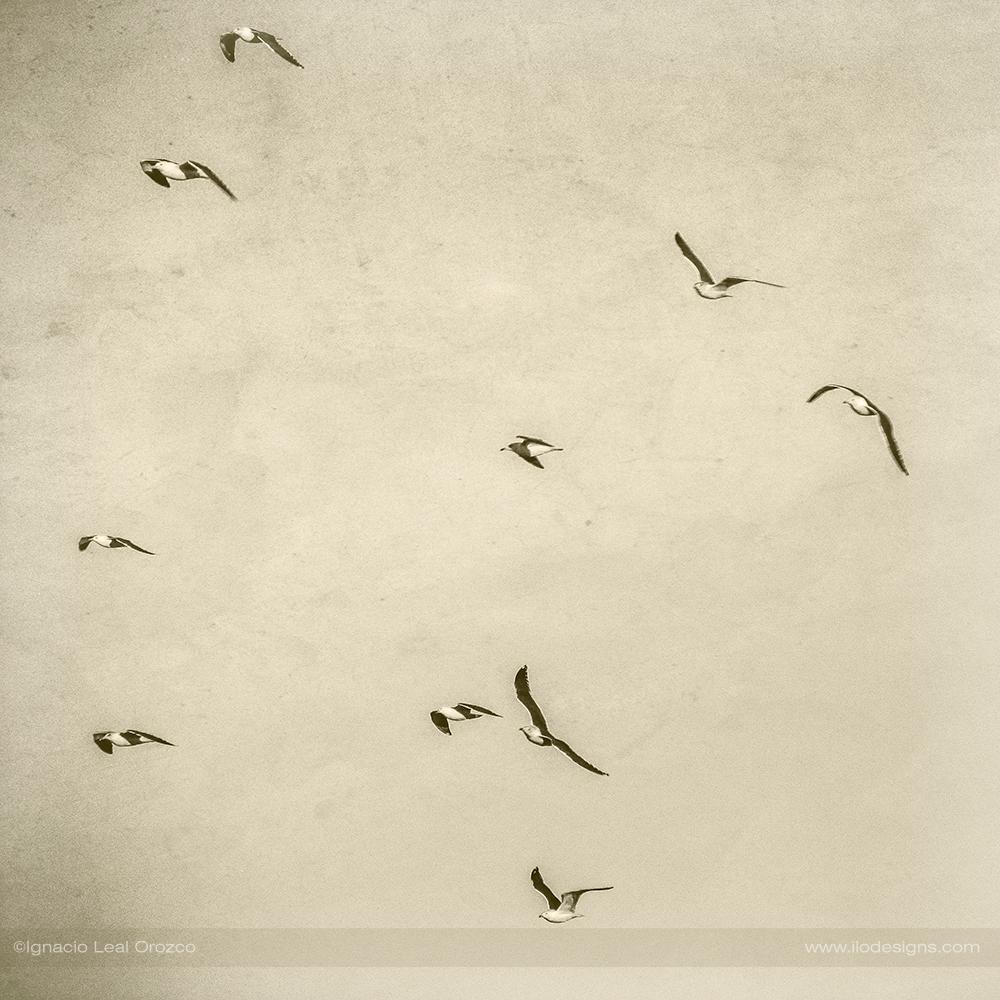 Libres – free birds