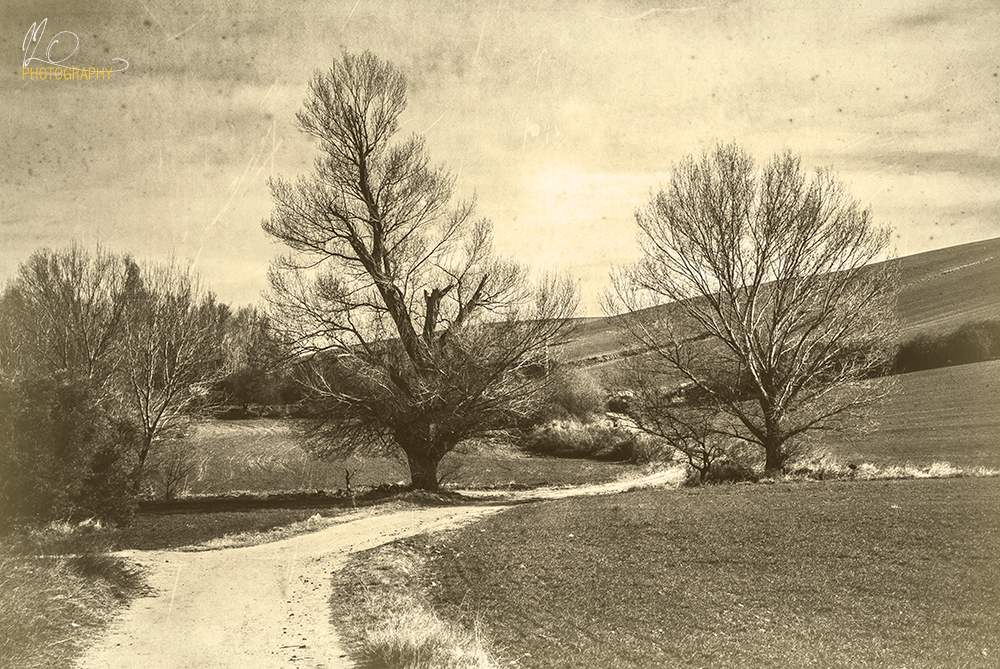 trees_farmland