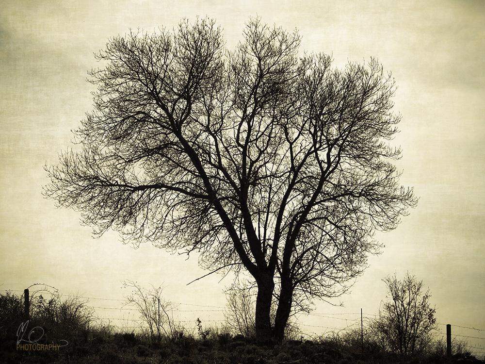 tree_retro