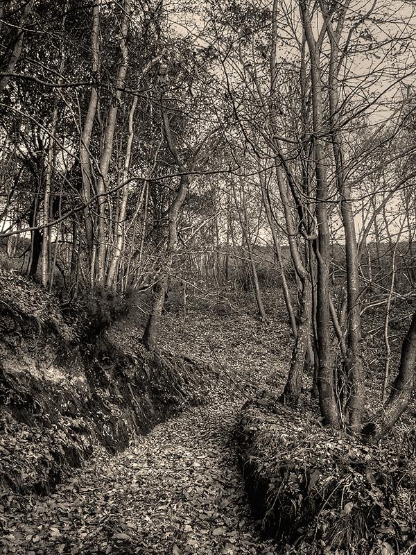 El bosque asturiano