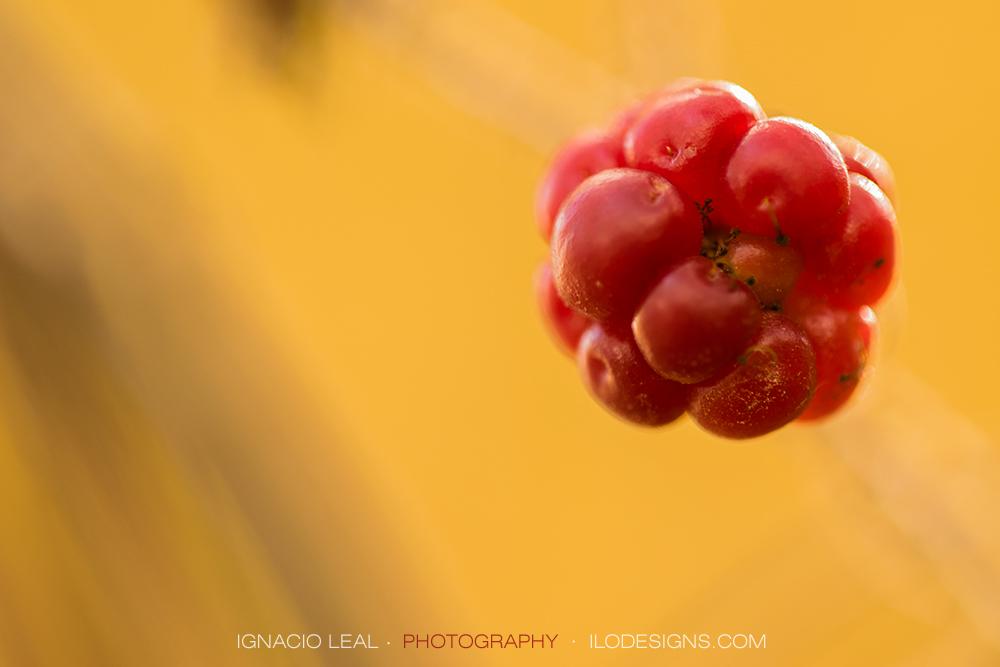Fruto del bosque