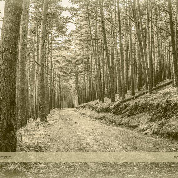 Senda forestal