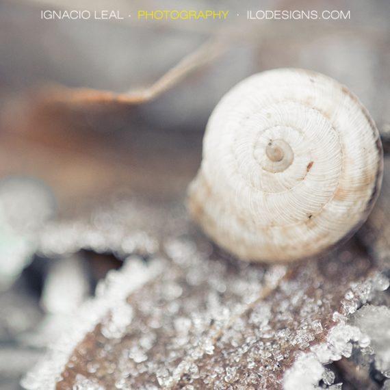 Escenario invernal