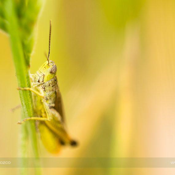Vidas en la pradera – meadow lifes #2