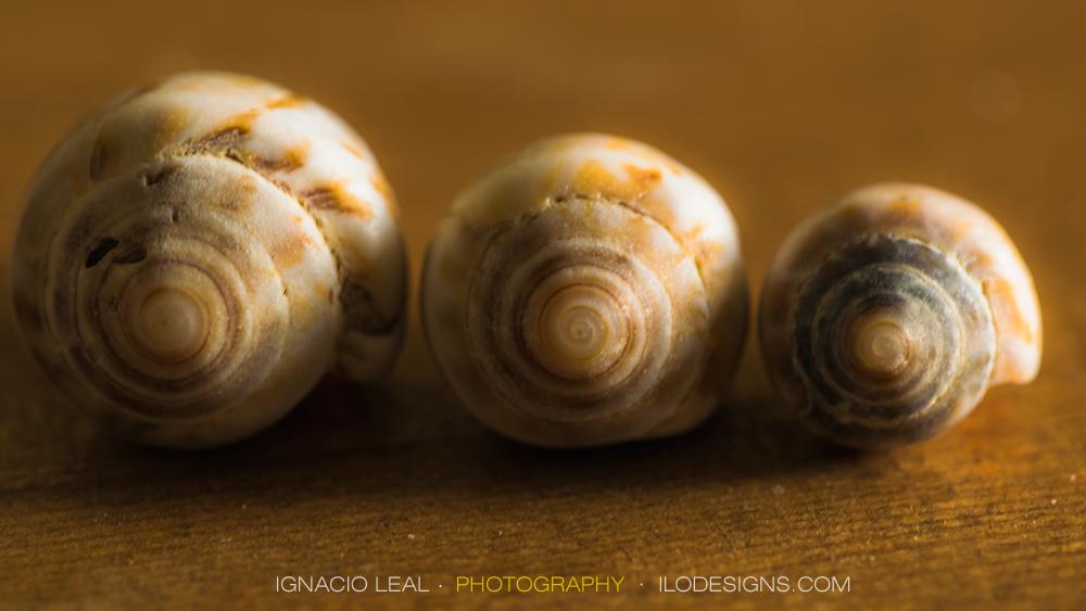 conchas_marinas