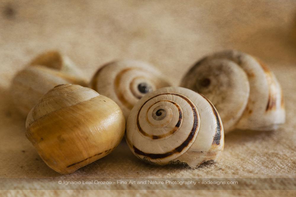 shells_still_life