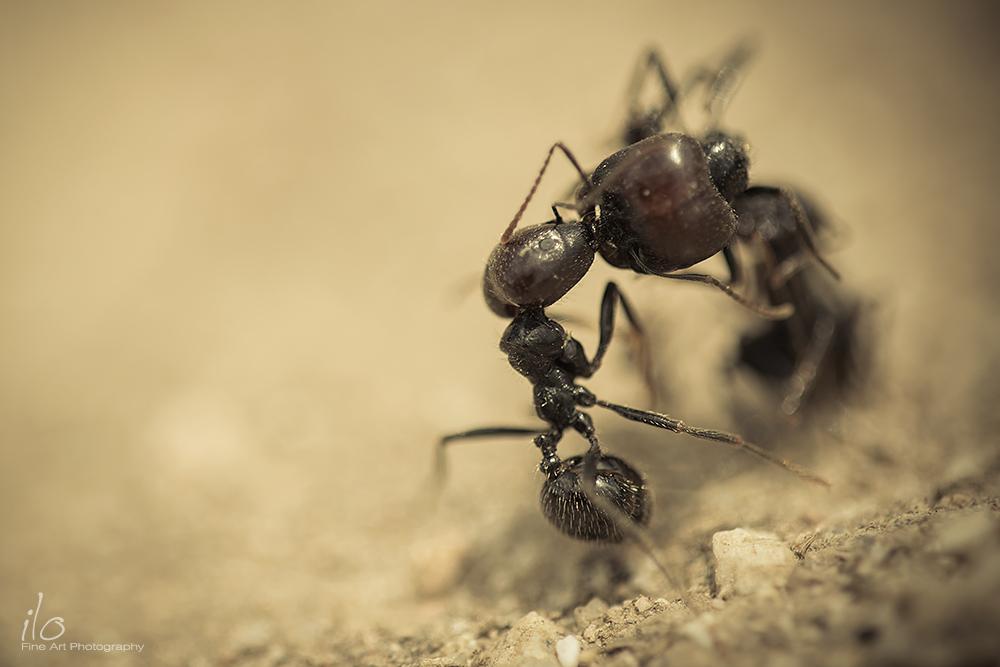 ants_ignacio_leal