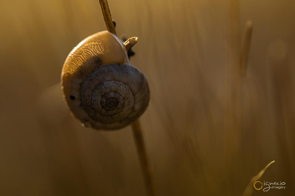 snail_ignacio_leal