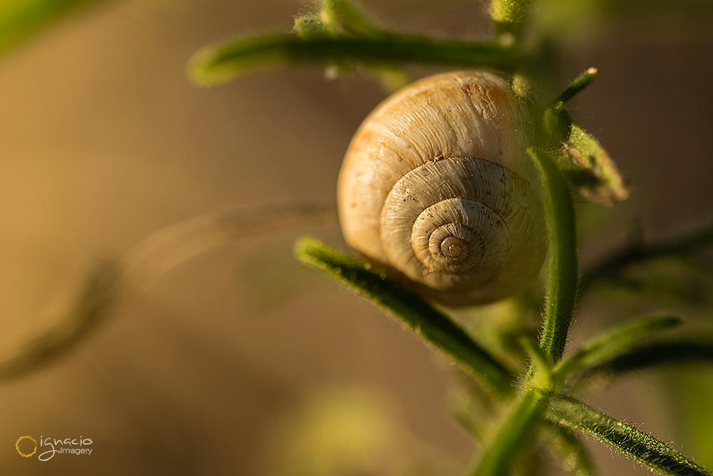 fine_art_snail