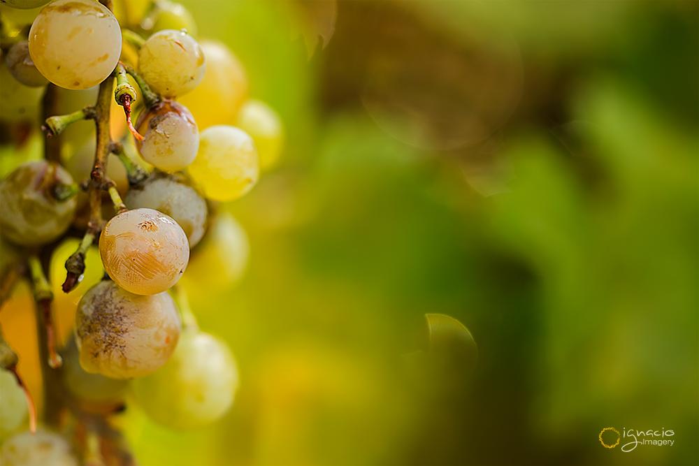 grapes_macro
