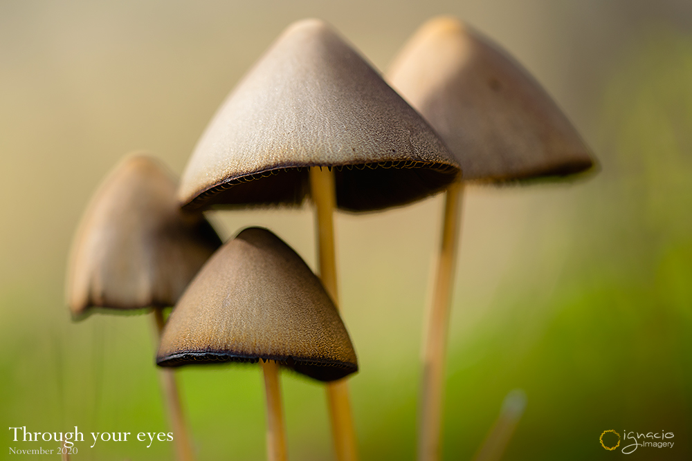 macro_mushrooms